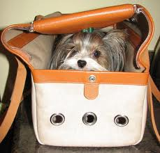 Dog inside a Hermes bag